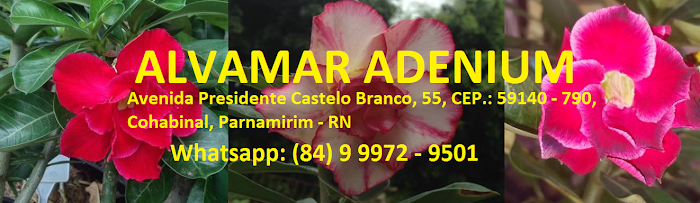Alvamar Adenium Rosas do Deserto