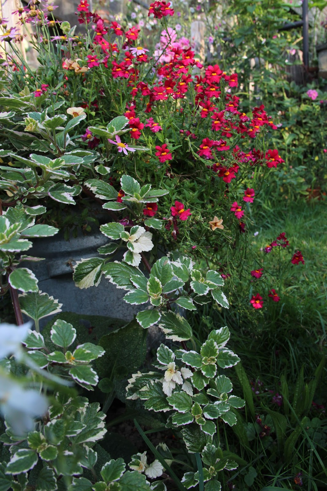 je suis au jardin : jardinières, potées et paniers suspendus (2)