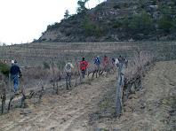 Travessant una plantació de vinyes a la part més alta de la caminada