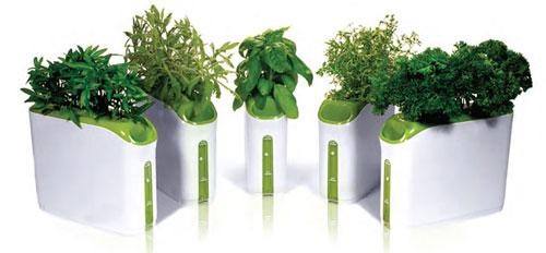 Proprietà benefiche delle erbe aromatiche