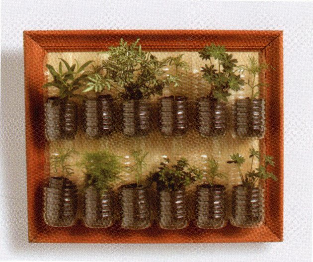 plantas para jardim vertical de garrafa pet:Plastic Bottle Herb Garden