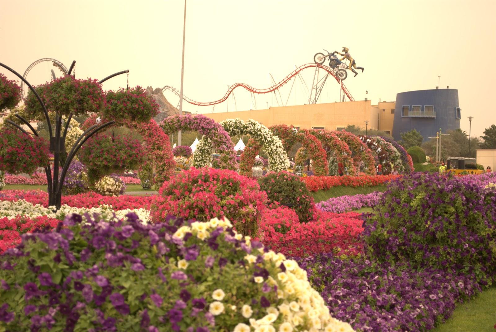 A day in Miracle Garden, Dubai | Vagish Hardooru