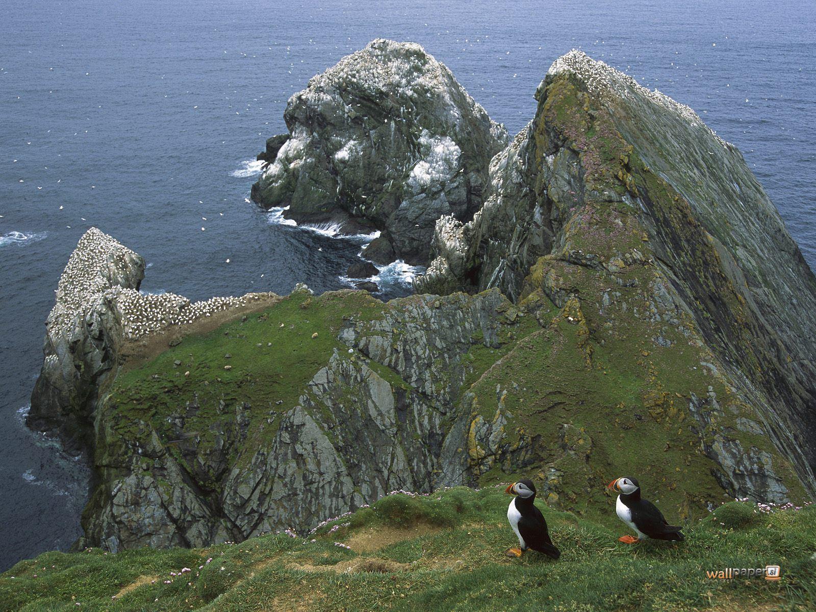 http://2.bp.blogspot.com/-CUDdiIzTe4c/ThZ49815osI/AAAAAAAAAlY/-vZOXsuc4i0/s1600/Atlantic-Puffin-Hermaness-Unst-Island-Shetland-Islands-United-Kingdom-Wallpaper.jpg