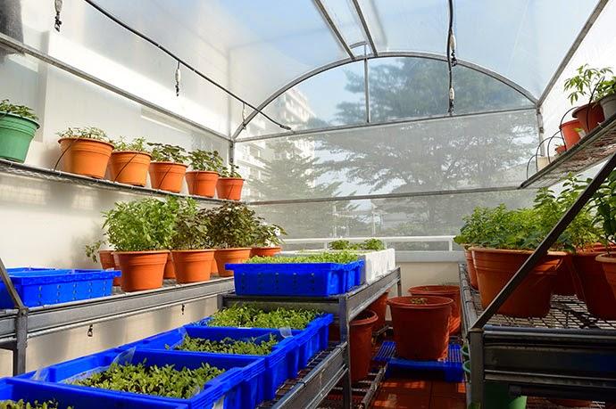 nhà kính trồng rau trong đô thị
