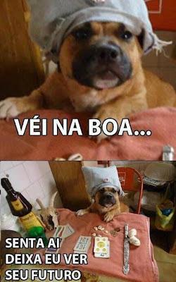 veí na boa cigano cachorro, cão cigano meme, meme do cachorro safado, meme do cão engraçado, meme dos bichos, meme dos animais engraçados, meme você está fazendo isso do jeito certo, errado
