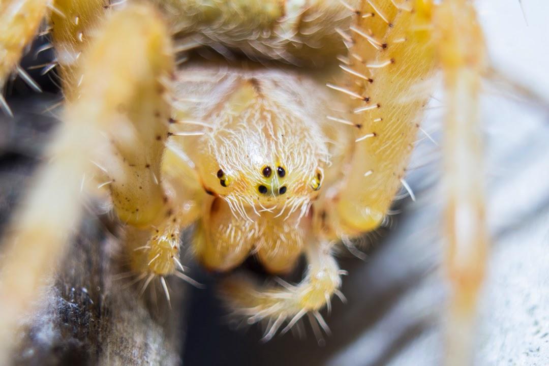 Detalle de una parte de la araña