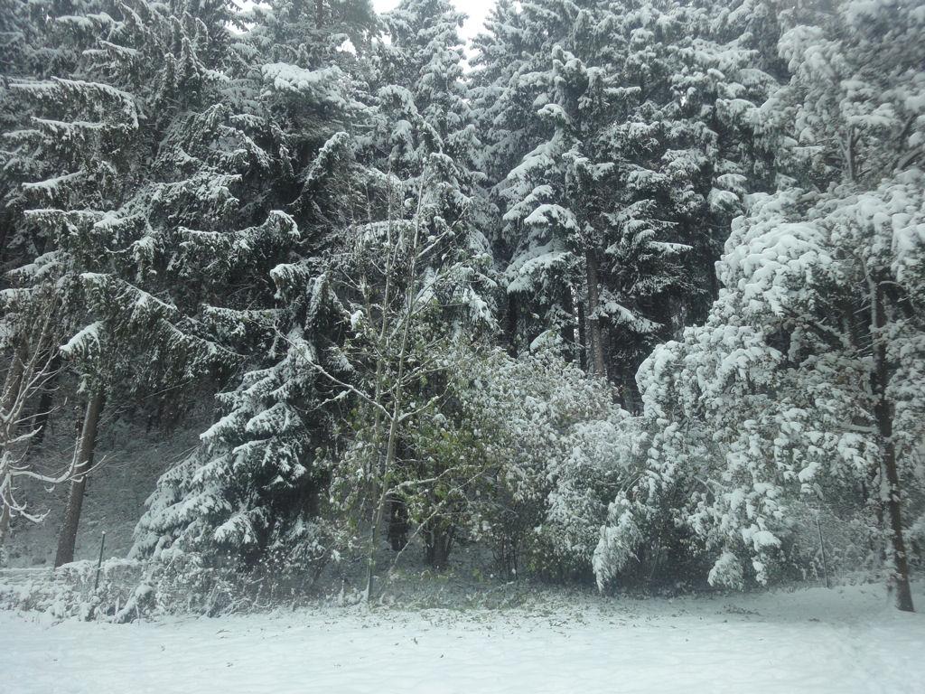 Sticheldeern Winterwonderland