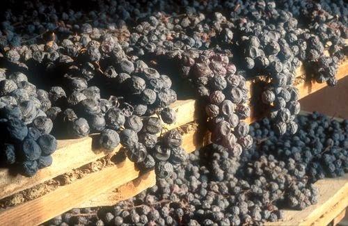 Gennaio: vigneti innevati, degustazioni di vini ed eccellenze enogastronomiche da non perdere a Milano e non solo