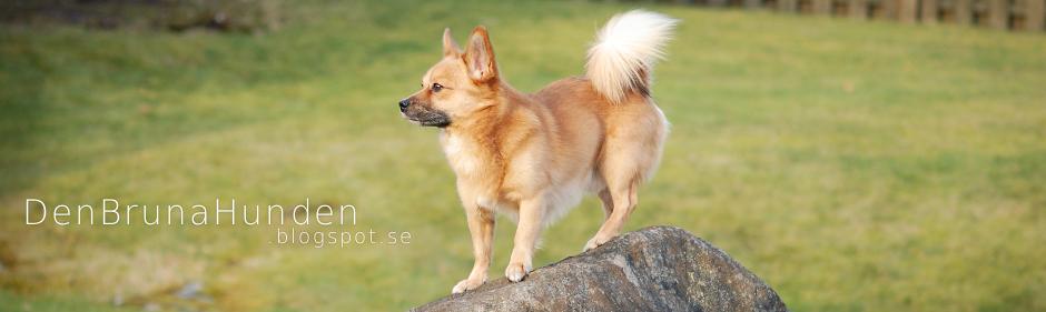 Den Bruna Hunden