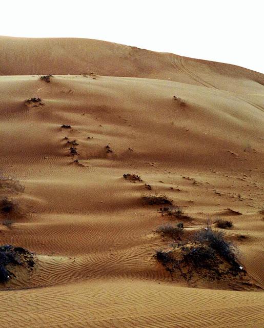 sand with vegetation