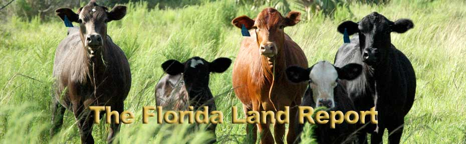 The Florida Land Report