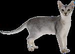semisal kucing