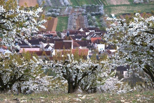 Jussy perché, Jussy perched on the trees, Жюсси над деревьями