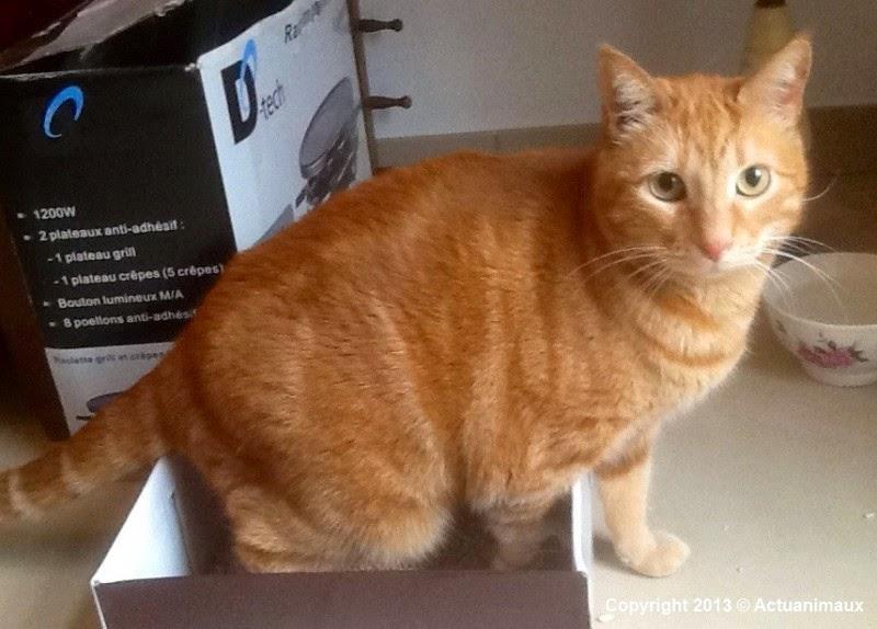 La voix aux chats pitres urgence une famille pour - Voix de garfield ...