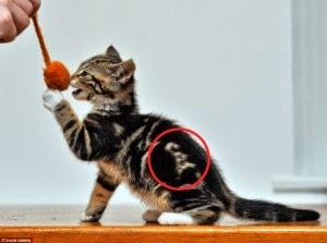 Tubuh Kucing Unik Yang Bertuliskan Cat