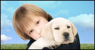 dog care3