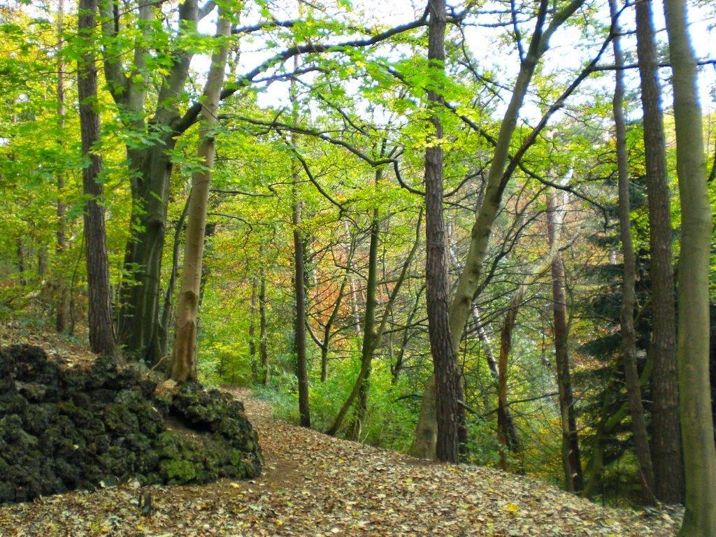Herbst Wald Hunderunde