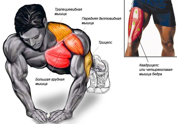 Как накачать грудные мышцы в домашних условиях за неделю мужчине