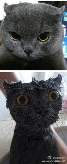 Funny Cat Photos - Cats Mods
