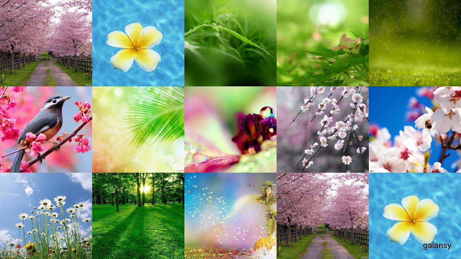 Фото цветов на рабочем столе