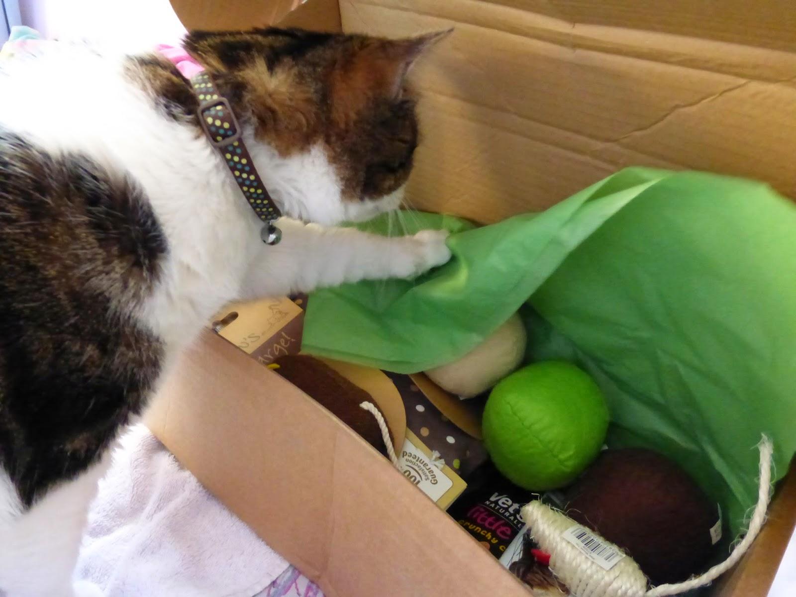 Cat Pet Parcel