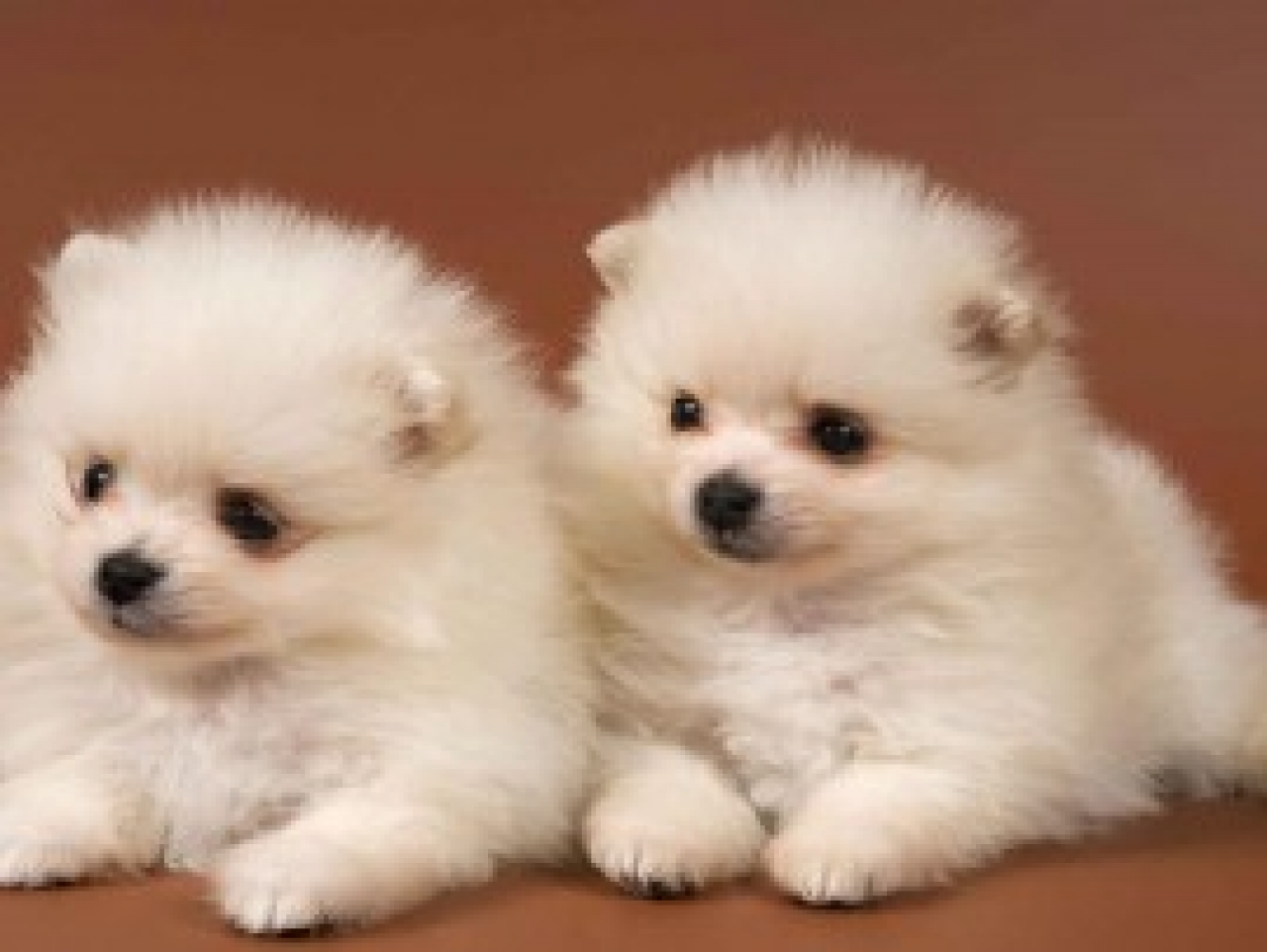 Cute PuppiesVery Cute Puppies Wallpapers