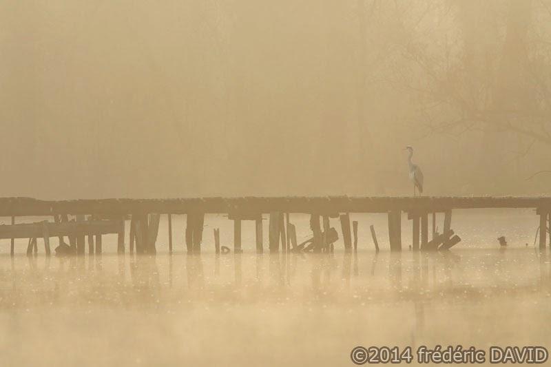 étang ponton brume silhouette héron cendré Vert-le-Petit Essonne