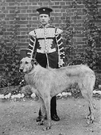 Brian Boru Royal Irish Rangers Irish wolfhound