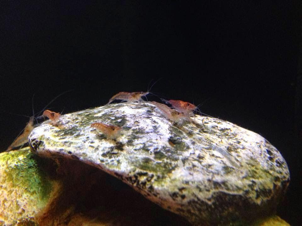 Love Fish Concept Aquarium 19l