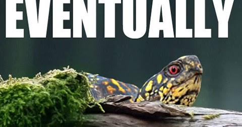 Eventually+turtle+funny+animals.jpg