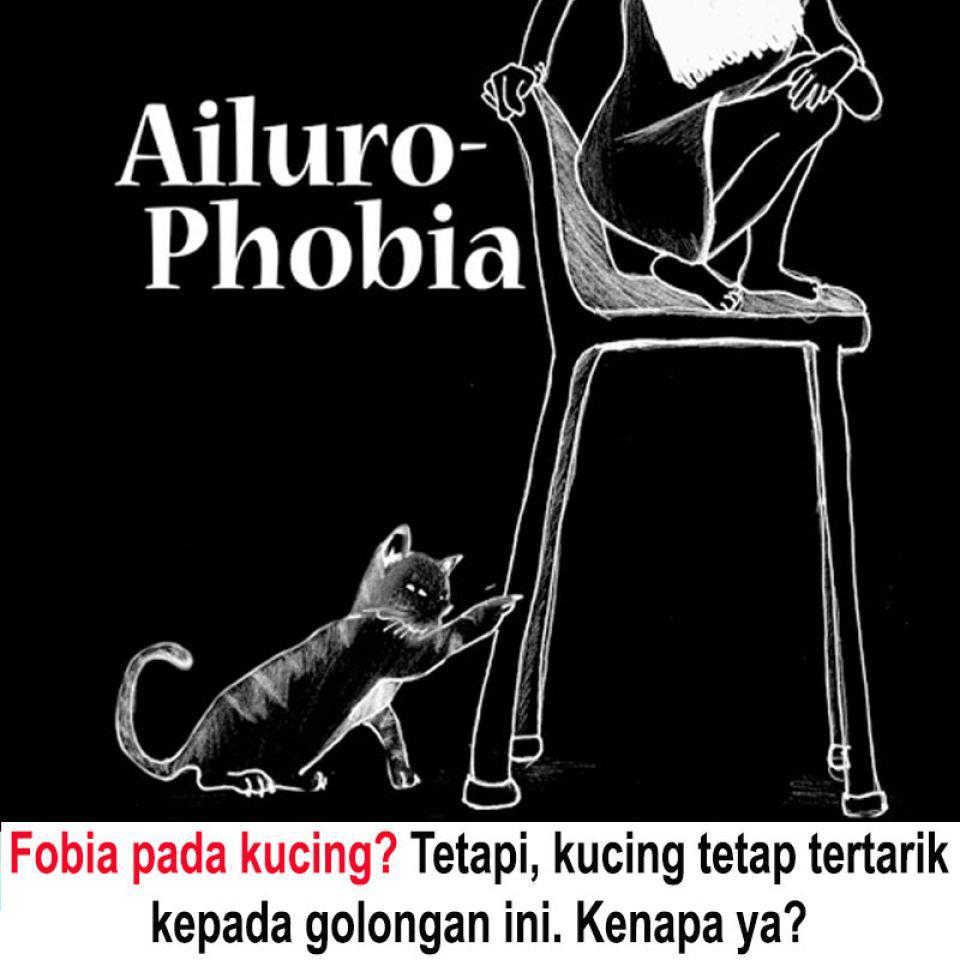 Ailuro-Phobia @ Fobia Pada Kucing