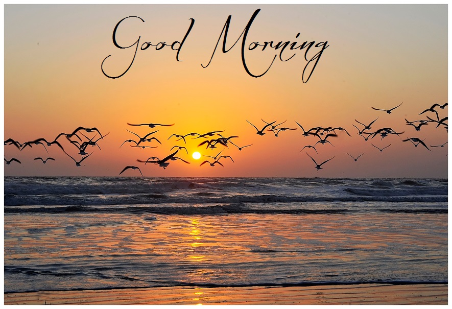 Good Morning Nature Image : Latest good morning cards hottest pics