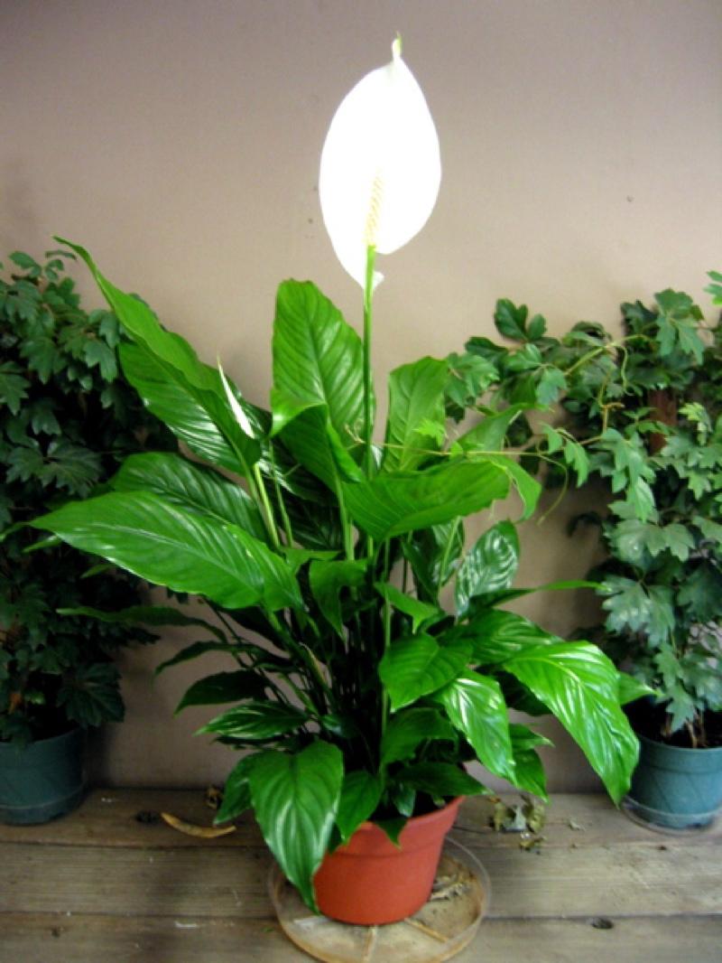 Los mejores consejos para un jard n interior jard n y terrazas - White flowering house plants ...