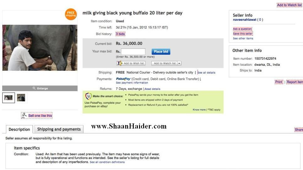 Funniest eBay Auction : Young Black Buffalo Giving Milk 20 Liter/Day