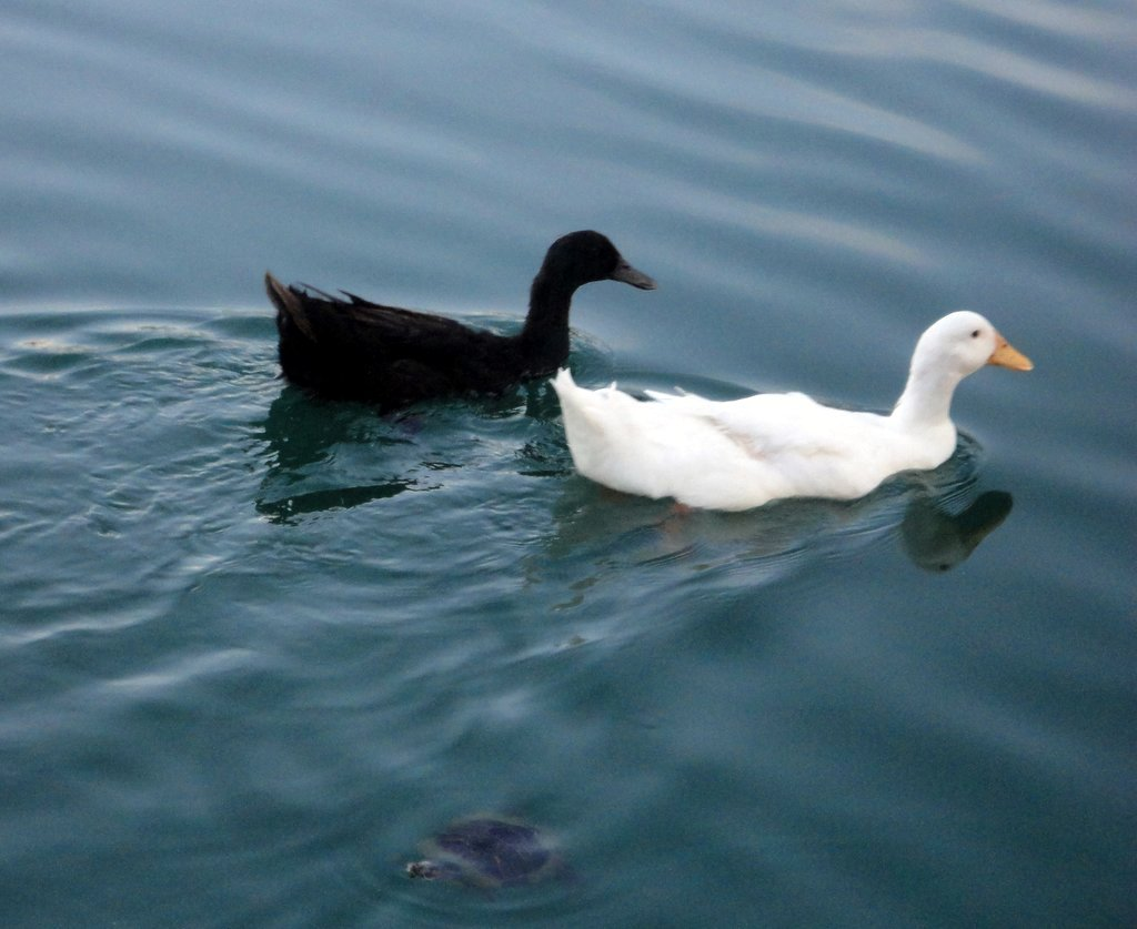 Q Is For Quack So now    Q   is for Quack