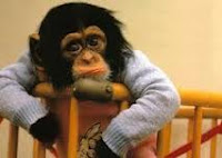 monyet bingung