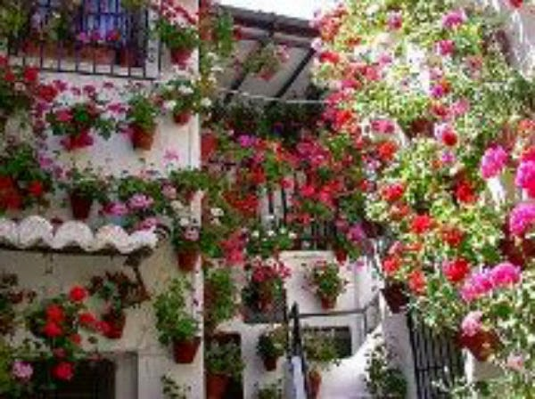 Os gerãnios da Espanha. Lindos, coloridos!!