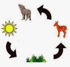 http://studyjams.scholastic.com/studyjams/jams/science/ecosystems/food-chains.htm