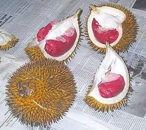 buah durian tersebut,maka kandungan durian , manfaat durian