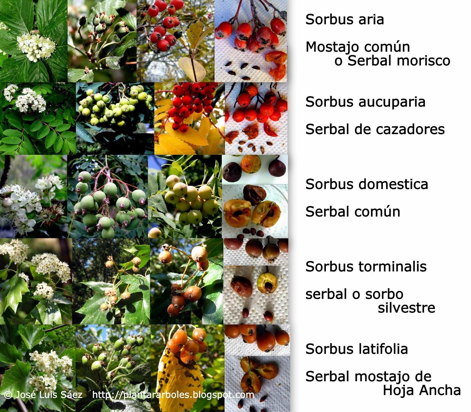 Fotos De Flores De Todos Os Tipos - Todas as plantas medicinais Criasaude com br