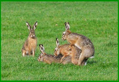 Fakta Unik Tentang Kelinci