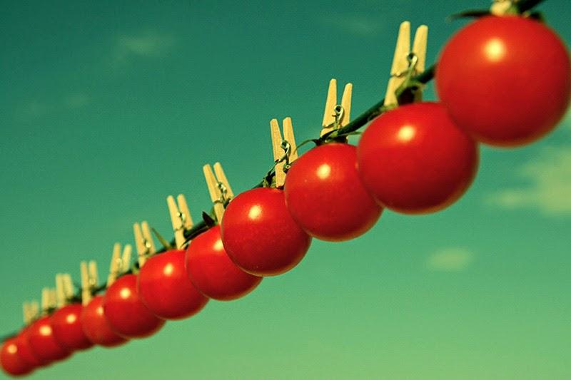 ловля нате помидор