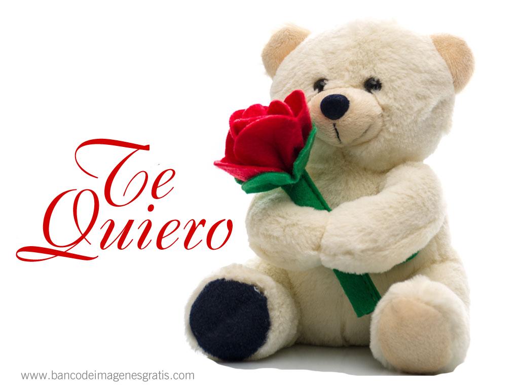 BANCO DE IMÁGENES: El amor es la flor de la vida - Osito