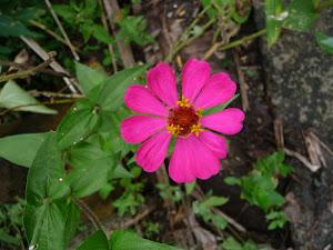 Indo Bunga
