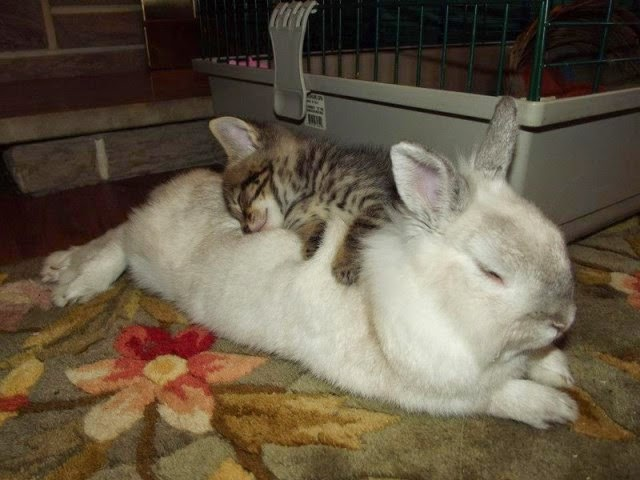 parejas de animales que duermen juntos.