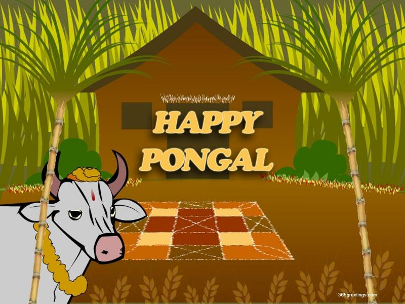 ... | MORE: Makara Sankranti (Pongal) 2012 Wallpapers,Greetings,Photos