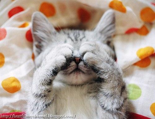 Funny kitten.