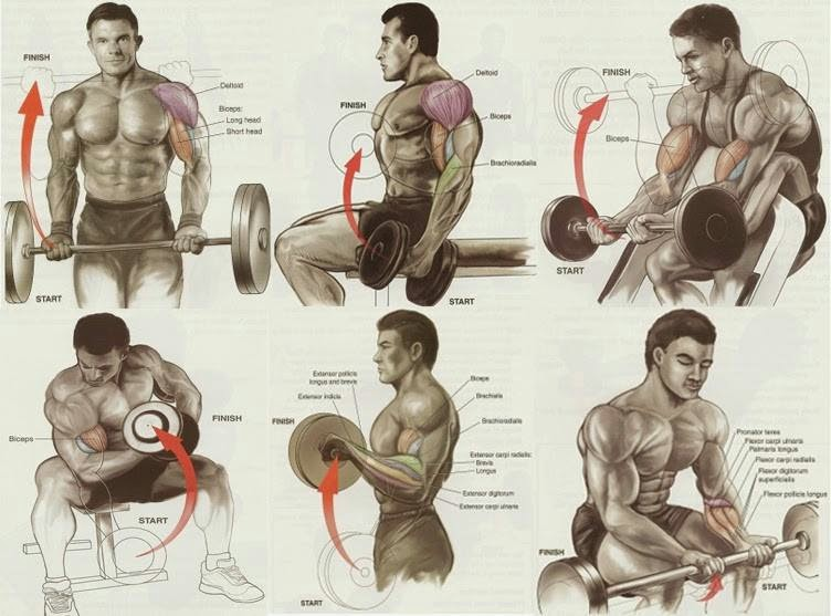 Exercises for Best Biceps Workout for Mass - all