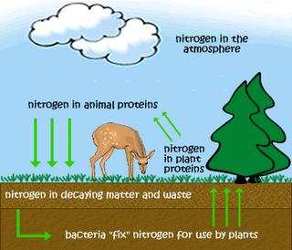 Macam-macam Daur Biogeokimia