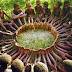 An anthropologist proposed a game to children in an African tribe. This is how they tackled it!